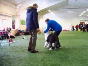 Hadeland Hundeklubb 15.02.15