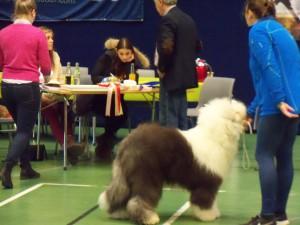 Klubben for Gårds- og Fjellhunder 04.04.15