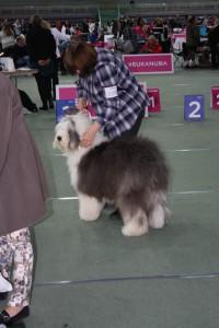 Beautiful littledog All About Me